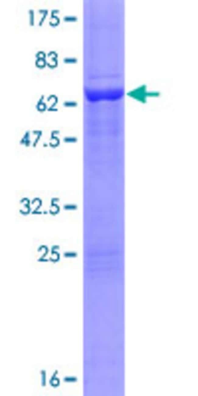 Abnova Human PRPSAP2 Full-length ORF (NP_002758.1, 1 a.a. - 369 a.a.) Recombinant