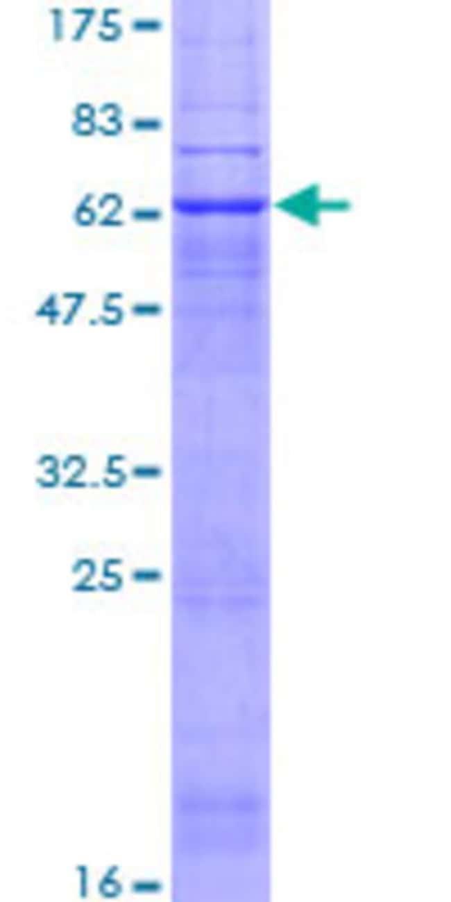 Abnova Human PTGER2 Full-length ORF (NP_000947.2, 1 a.a. - 358 a.a.) Recombinant