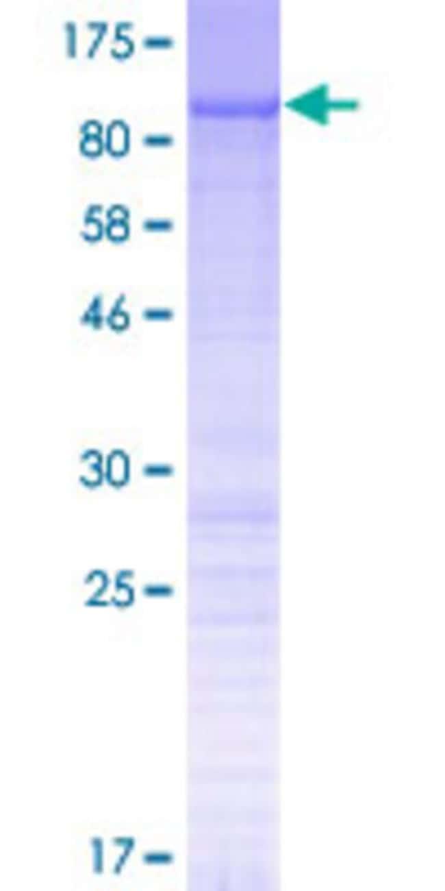 AbnovaHuman N4BP2L2 Full-length ORF (NP_149102.2, 1 a.a. - 651 a.a.) Recombinant