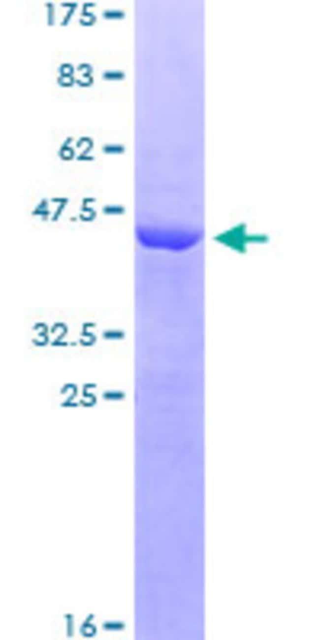 AbnovaHuman FAM3C Full-length ORF (AAH46932, 25 a.a. - 227 a.a.) Recombinant