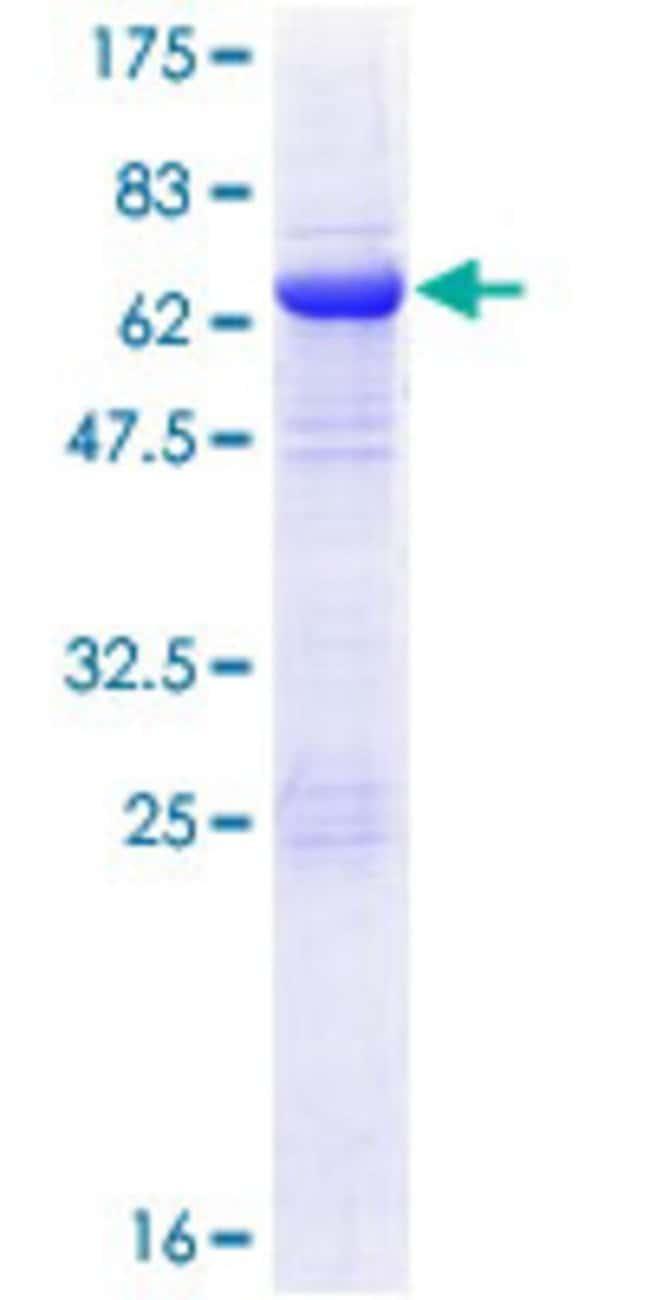AbnovaHuman EIF3M Full-length ORF (NP_006351.2, 1 a.a. - 374 a.a.) Recombinant