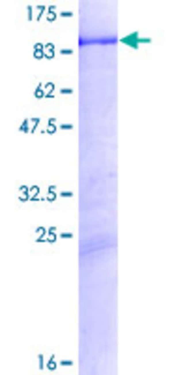 AbnovaHuman NXF1 Full-length ORF (NP_006353.2, 1 a.a. - 619 a.a.) Recombinant