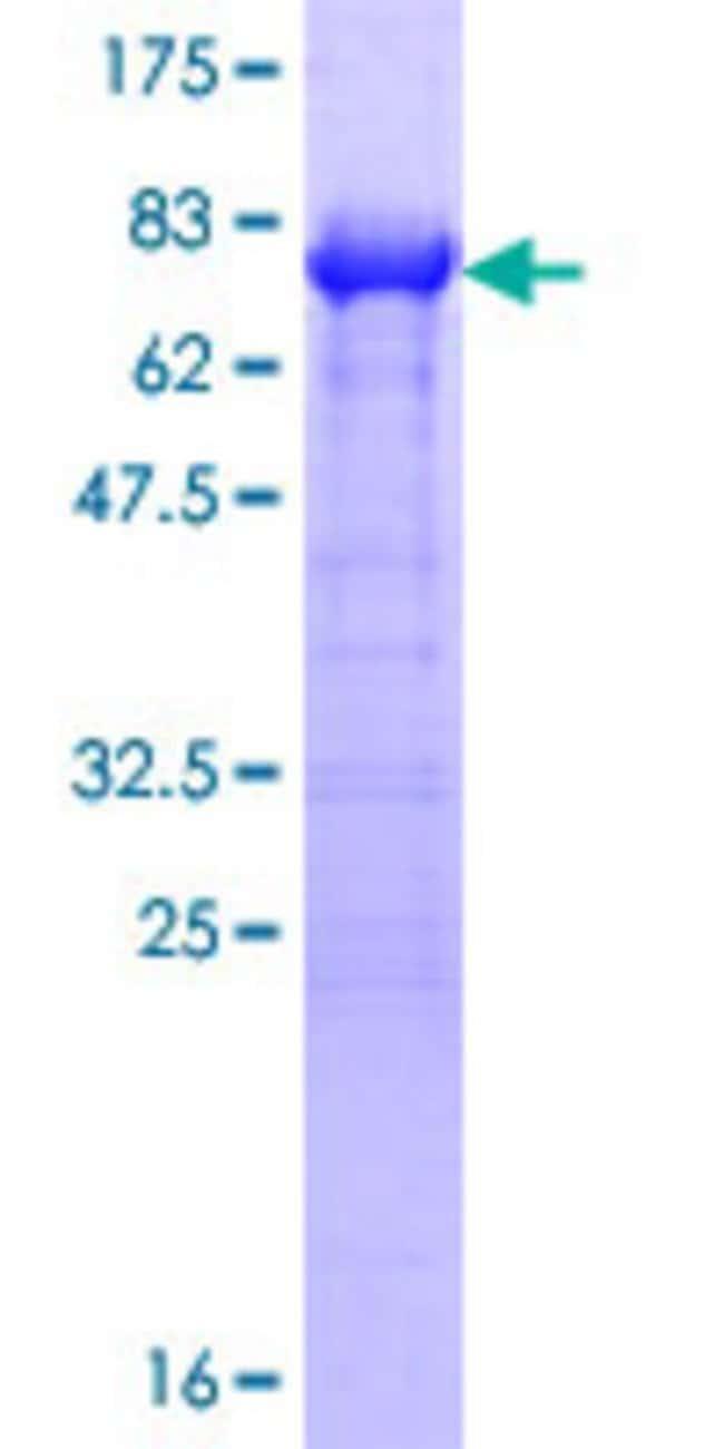 AbnovaHuman PAIP1 Full-length ORF (NP_877590.1, 1 a.a. - 400 a.a.) Recombinant