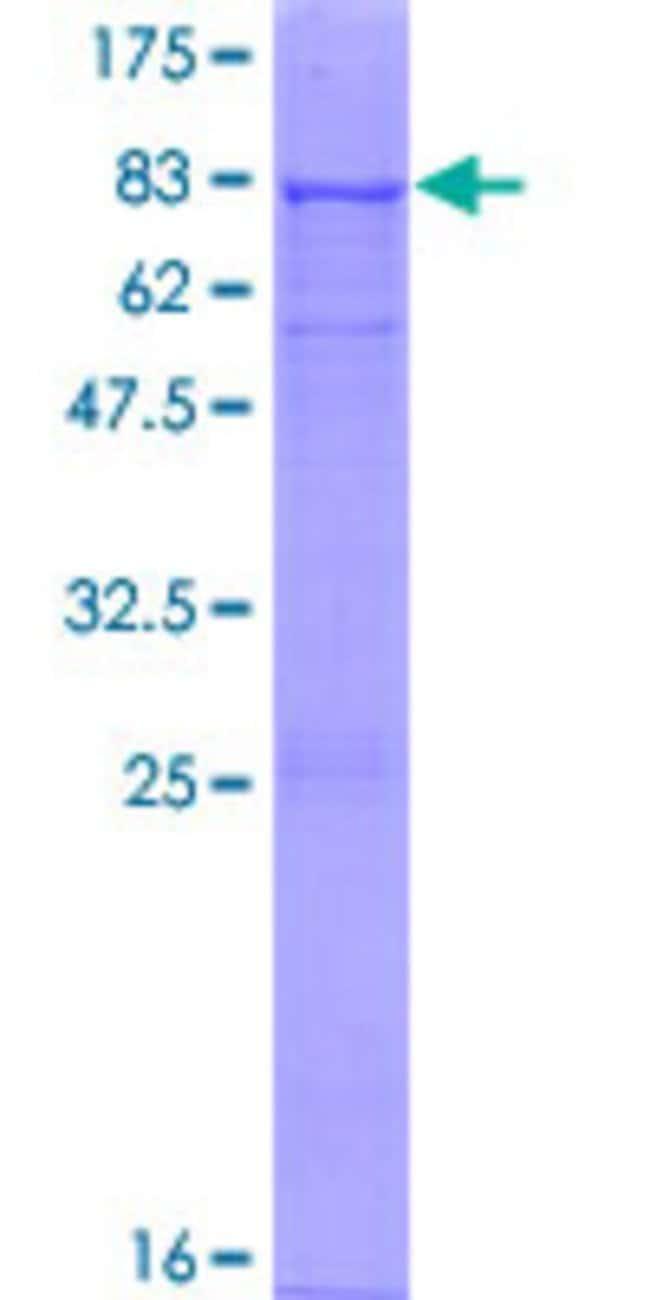 AbnovaHuman BTNL3 Full-length ORF (NP_932079.1, 1 a.a. - 466 a.a.) Recombinant