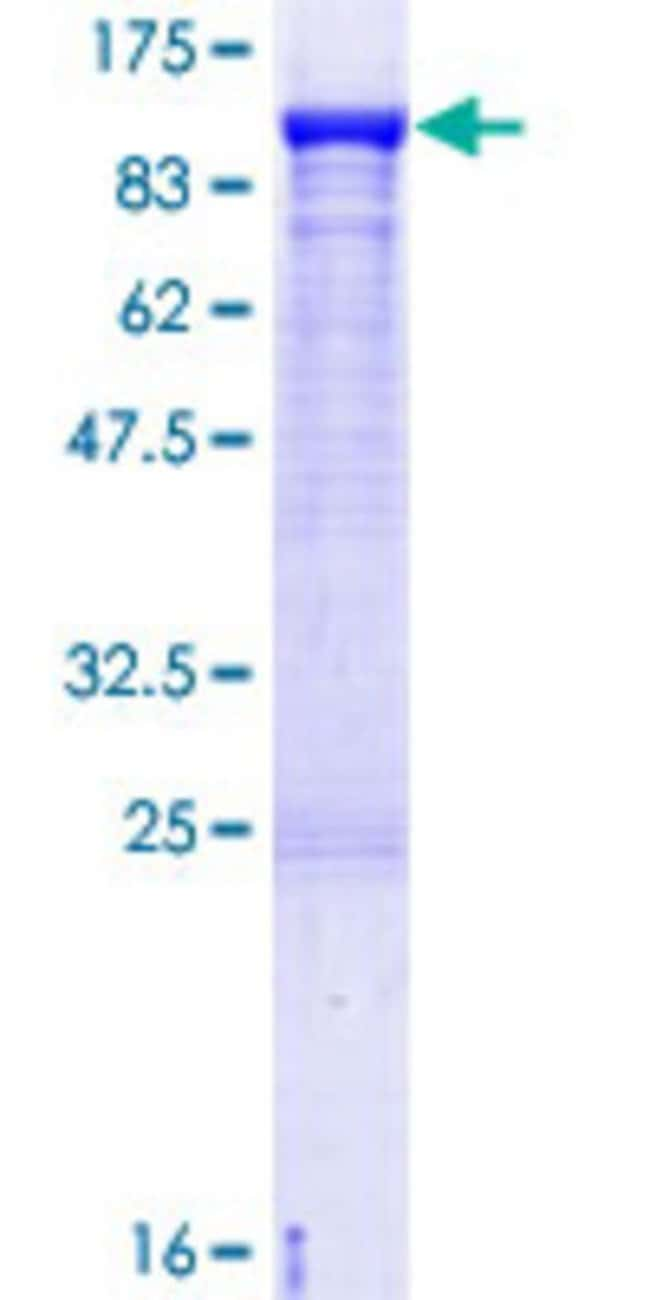 AbnovaHuman KIF3A Full-length ORF (AAH45542.1, 1 a.a. - 702 a.a.) Recombinant