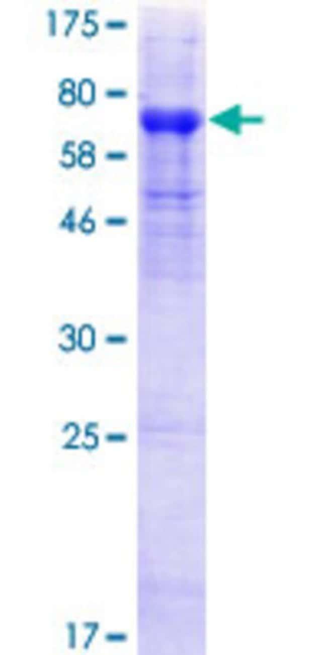 AbnovaHuman HHLA2 Full-length ORF (NP_009003.1, 1 a.a. - 414 a.a.) Recombinant