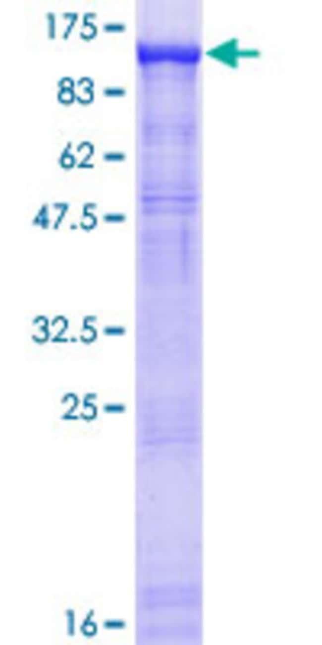 AbnovaHuman DDX20 Full-length ORF (AAH34953.1, 1 a.a. - 824 a.a.) Recombinant