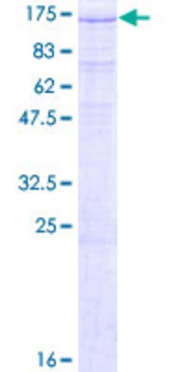 AbnovaHuman ZHX1 Full-length ORF (NP_001017926.1, 1 a.a. - 873 a.a.) Recombinant