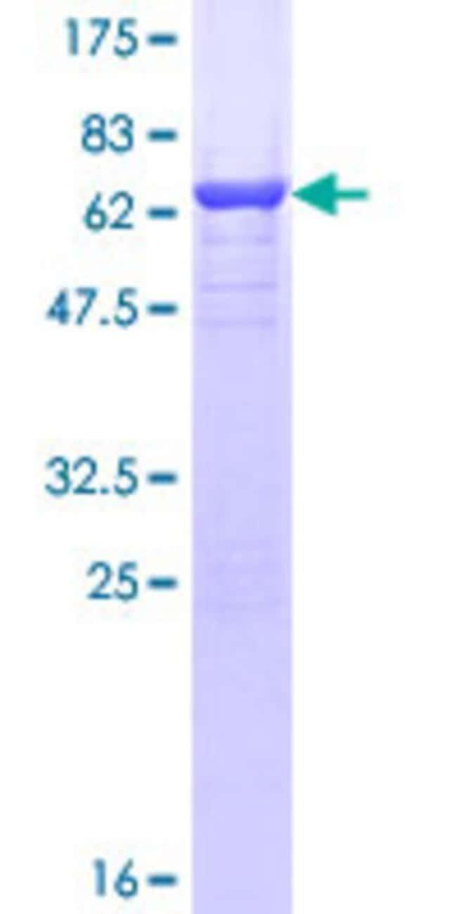 AbnovaHuman PTK9L Full-length ORF (NP_009215.1, 1 a.a. - 349 a.a.) Recombinant