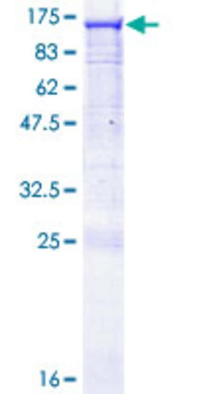 AbnovaHuman RASA3 Full-length ORF (NP_031394.2, 1 a.a. - 834 a.a.) Recombinant