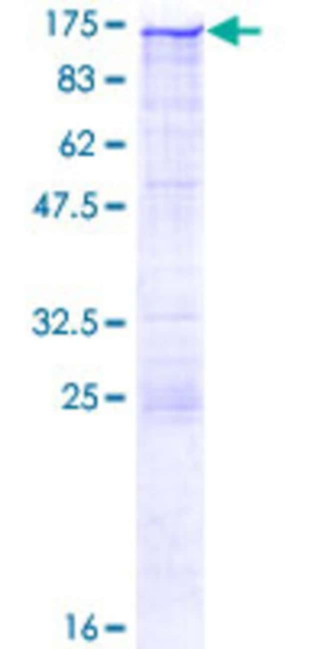 Abnova™Human CLSTN1 Full-length ORF (AAH33902.1, 1 a.a. - 971 a.a.) Recombinant Protein with GST-tag at N-terminal 25μg Abnova™Human CLSTN1 Full-length ORF (AAH33902.1, 1 a.a. - 971 a.a.) Recombinant Protein with GST-tag at N-terminal