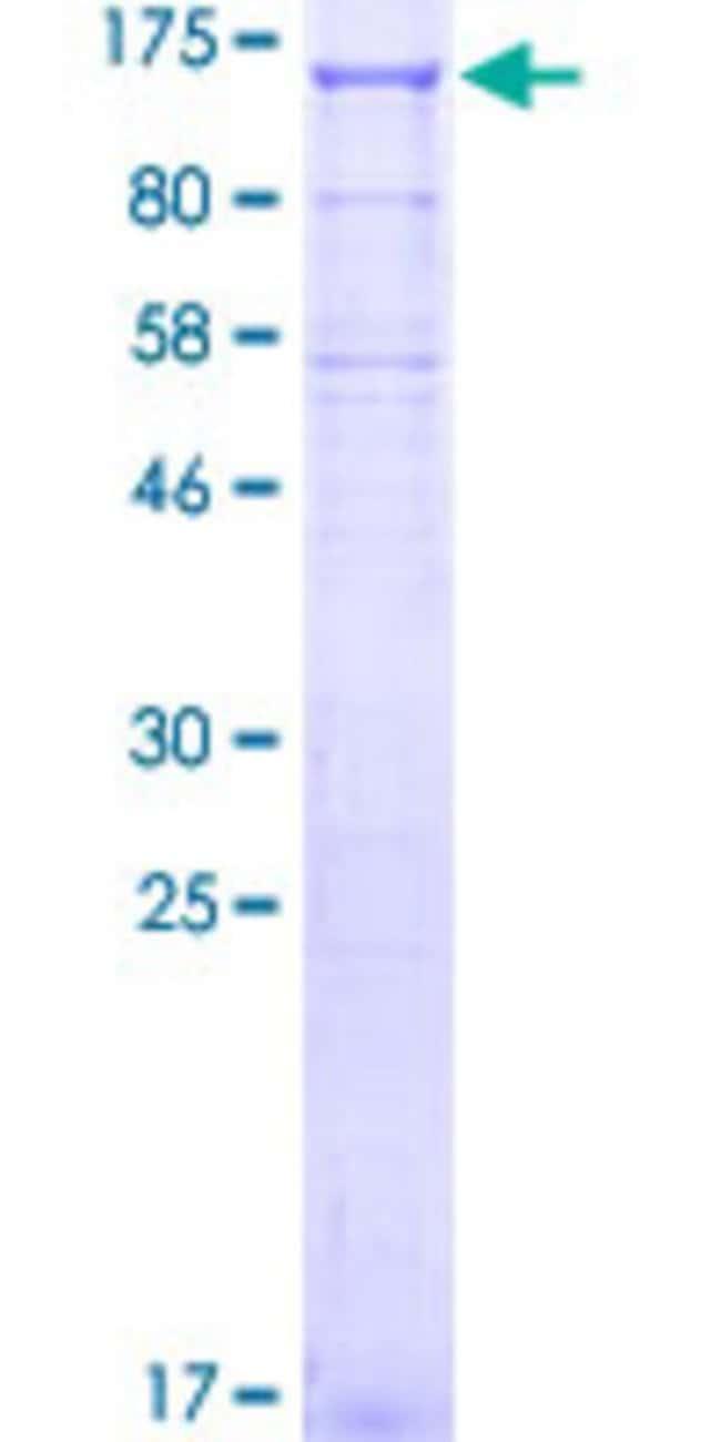 Abnova Human KIFAP3 Full-length ORF (ABM85040.1, 1 a.a. - 792 a.a.) Recombinant