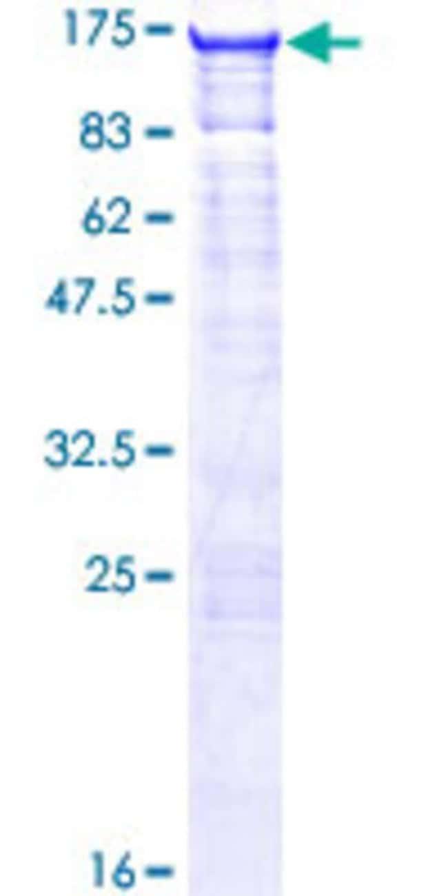 AbnovaHuman SLC4A1AP Full-length ORF (NP_060628.1, 1 a.a. - 796 a.a.) Recombinant