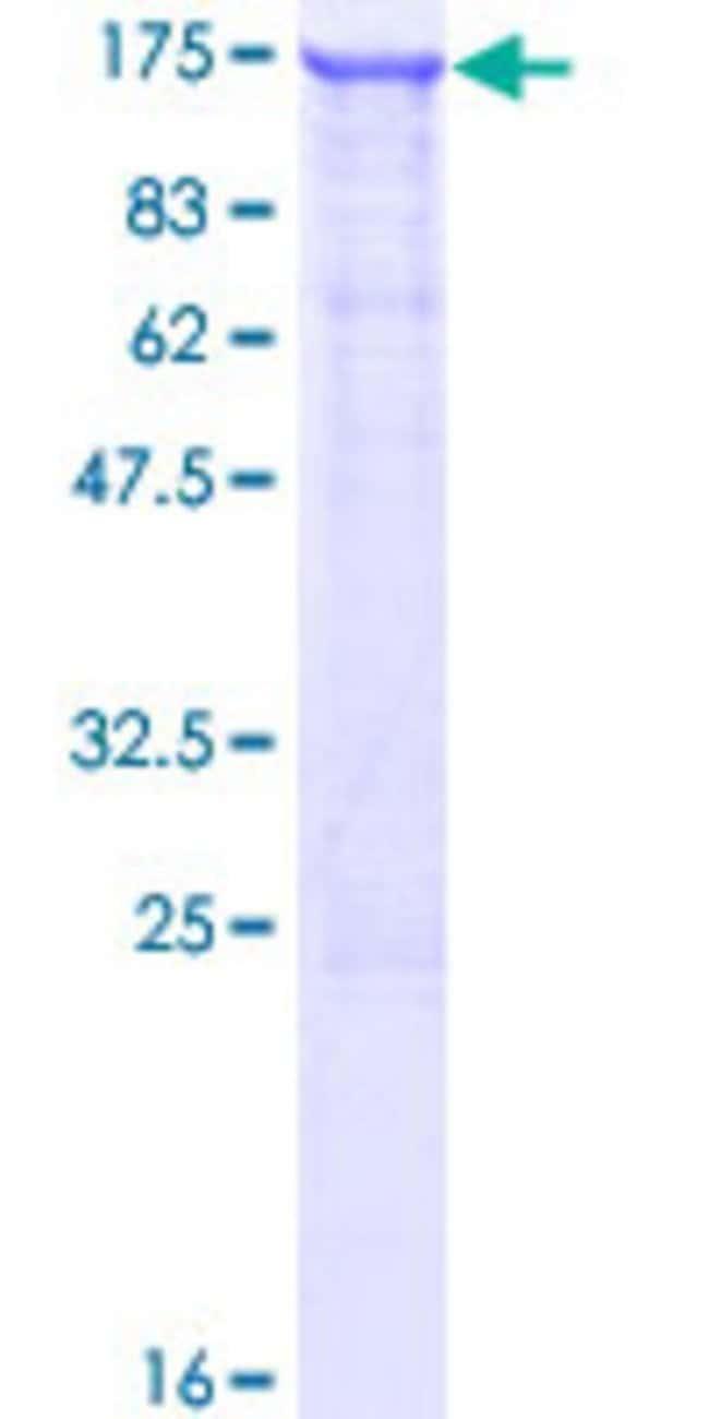 AbnovaHuman LIMCH1 Full-length ORF (AAH23546.1, 1 a.a. - 897 a.a.) Recombinant