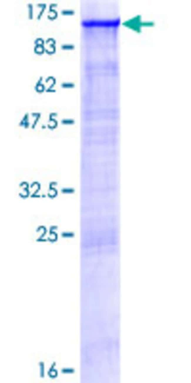AbnovaHuman AOF2 Full-length ORF (AAH40194.3, 1 a.a. - 876 a.a.) Recombinant