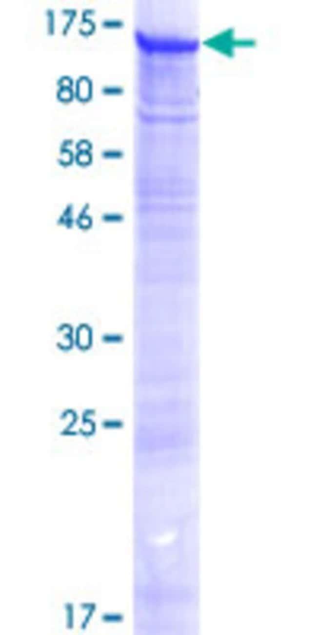 Abnova Human KIAA0082 Full-length ORF (NP_055865.1, 1 a.a. - 835 a.a.)