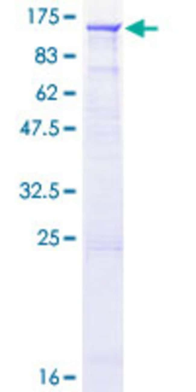 AbnovaHuman RGL1 Full-length ORF (NP_055964.3, 1 a.a. - 803 a.a.) Recombinant