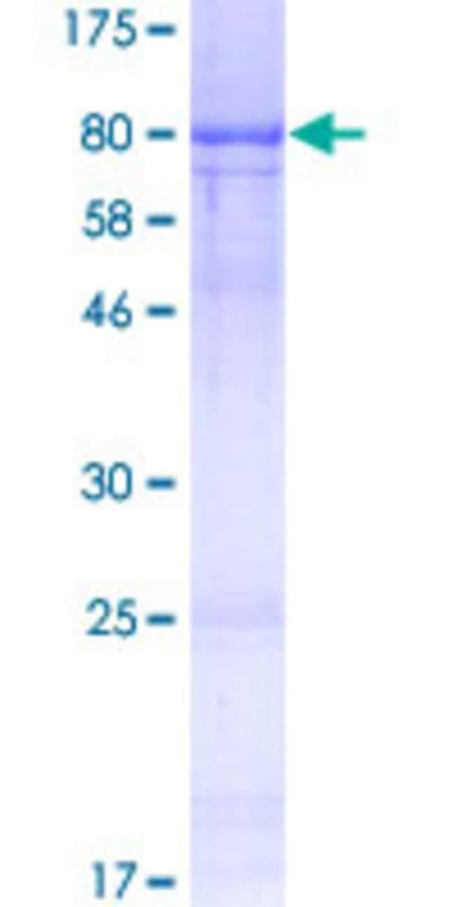 Abnova Human RCOR1 Full-length ORF (AAI11591.1, 1 a.a. - 482 a.a.) Recombinant
