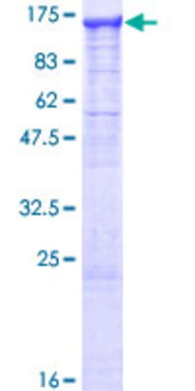 AbnovaHuman GANAB Full-length ORF (NP_938148.1, 1 a.a. - 944 a.a.) Recombinant