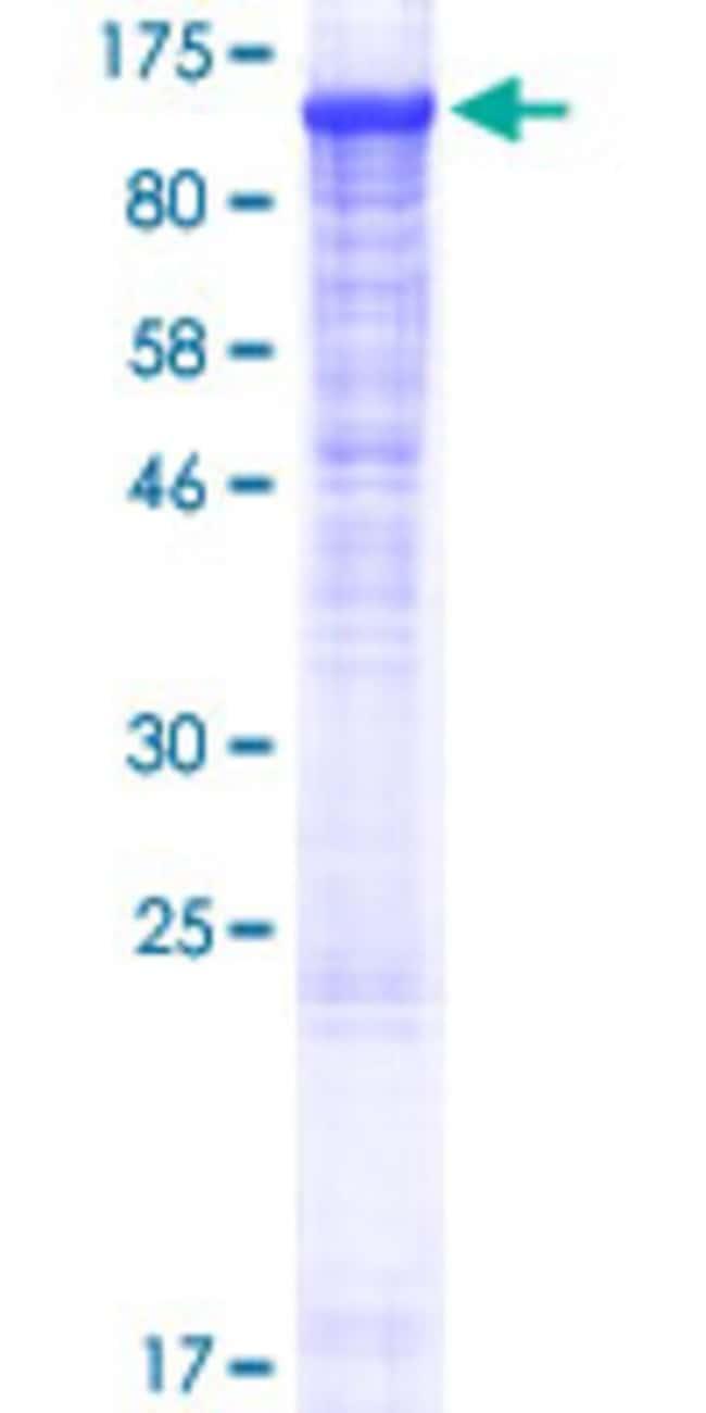 AbnovaHuman PLCL2 Full-length ORF (NP_055999.1, 1 a.a. - 1001 a.a.) Recombinant
