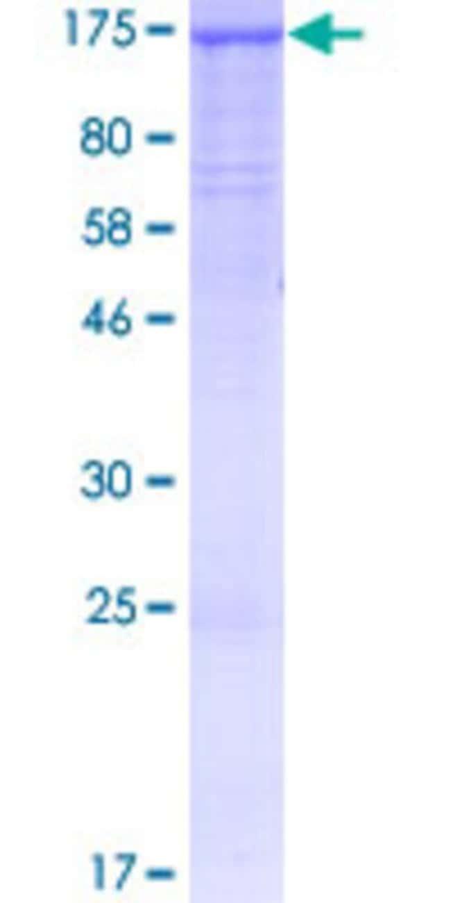 AbnovaHuman PACS2 Full-length ORF (AAH50351.2, 1 a.a. - 889 a.a.) Recombinant