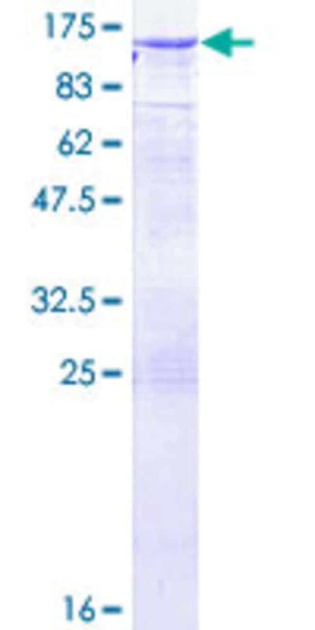 AbnovaHuman DNMBP Full-length ORF (AAH41628.1, 1 a.a. - 823 a.a.) Recombinant