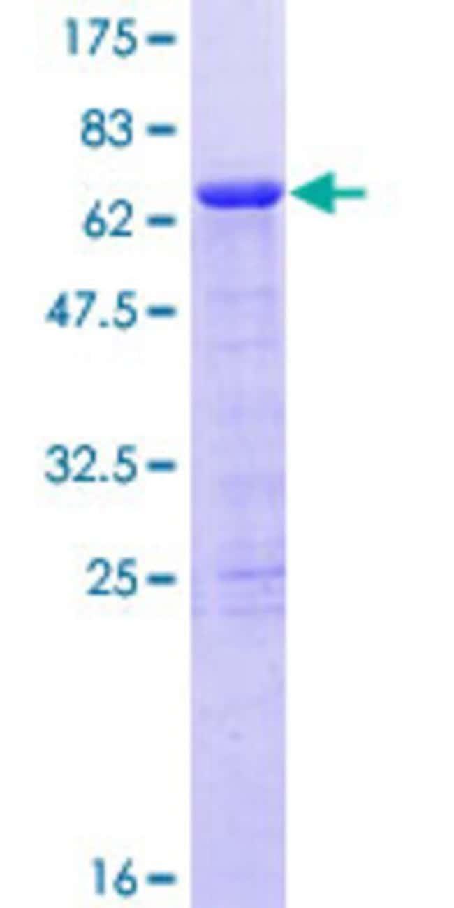 AbnovaHuman PHF15 Full-length ORF (AAH04292.1, 1 a.a. - 246 a.a.) Recombinant