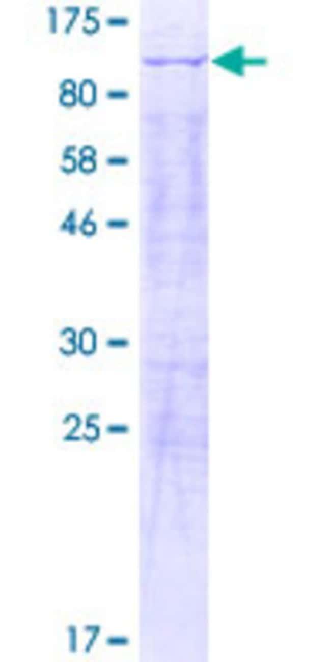 Abnova Human KIAA0323 Full-length ORF (AAH42554.1, 1 a.a. - 678 a.a.) Recombinant