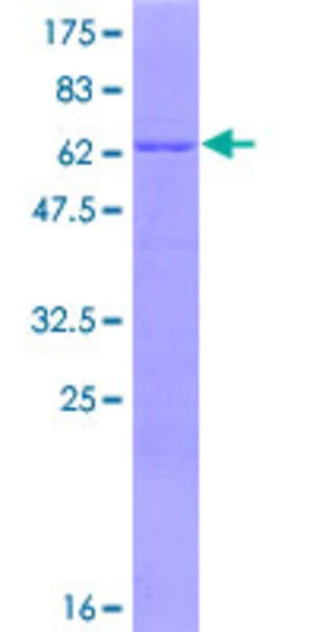 AbnovaHuman HSPBP1 Full-length ORF (NP_036399.3, 1 a.a. - 359 a.a.) Recombinant
