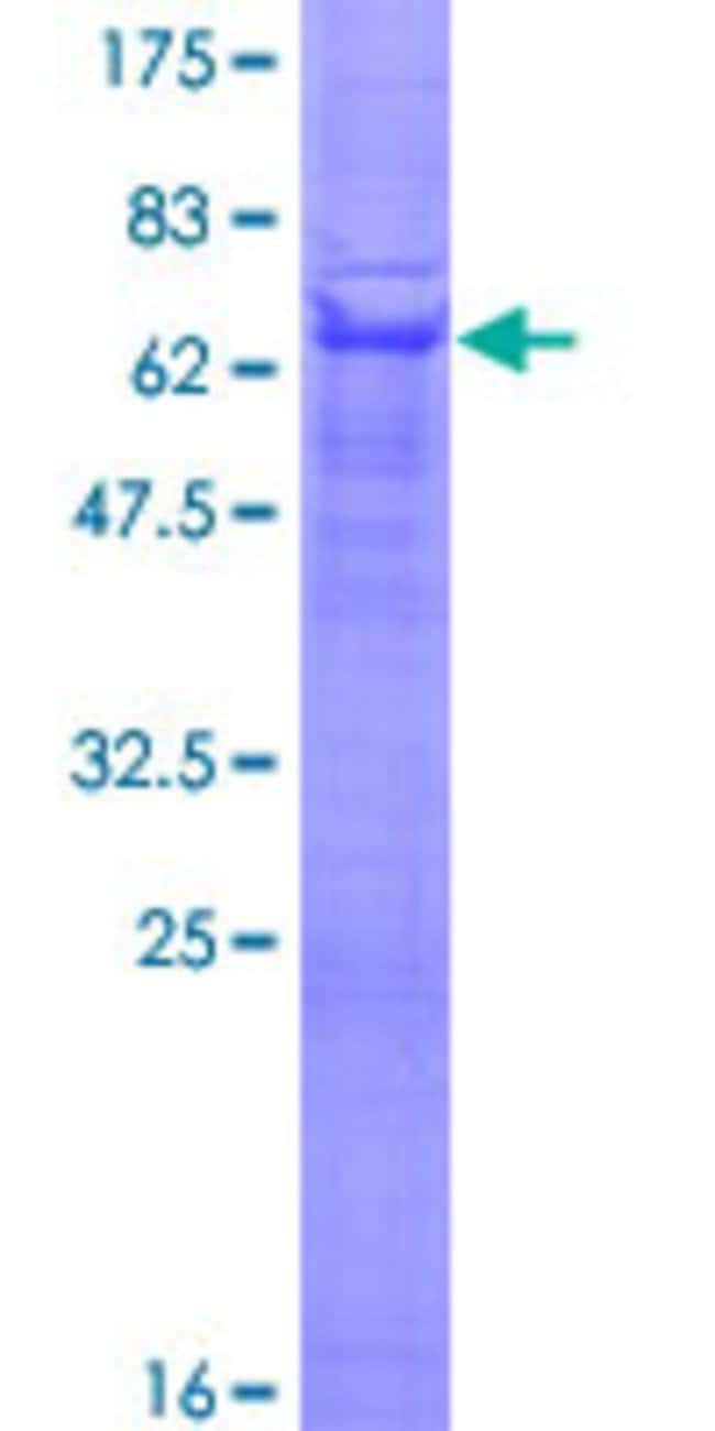 Abnova™Human PVRL3 Full-length ORF (AAH67808.1, 1 a.a. - 366 a.a.) Recombinant Protein with GST-tag at N-terminal 25μg Abnova™Human PVRL3 Full-length ORF (AAH67808.1, 1 a.a. - 366 a.a.) Recombinant Protein with GST-tag at N-terminal