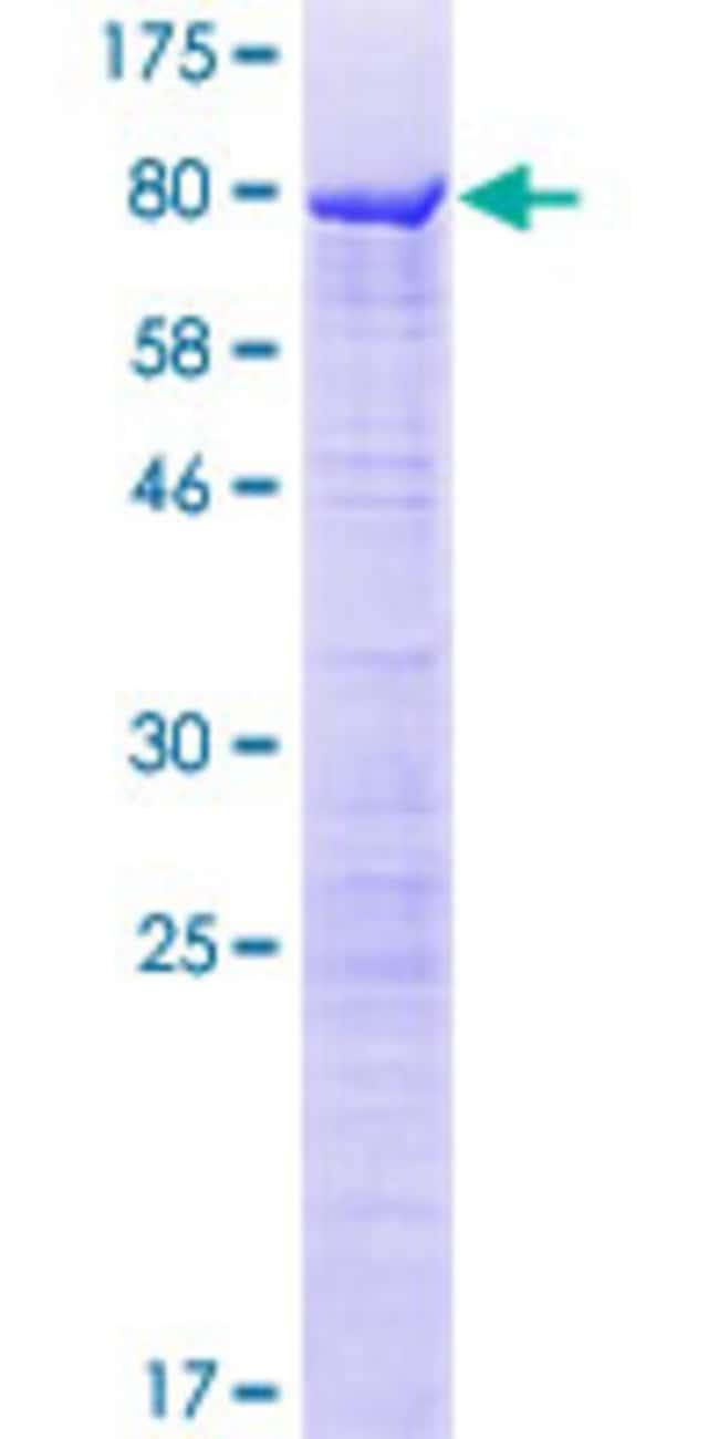 AbnovaHuman LOC26010 Full-length ORF (AAH18736.1, 1 a.a. - 488 a.a.) Recombinant