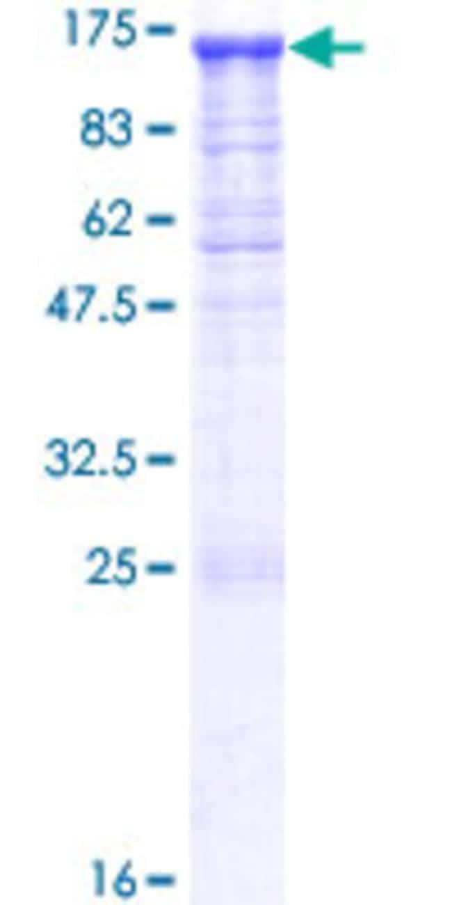 AbnovaHuman PCDHGA12 Full-length ORF (NP_003726.1, 1 a.a. - 932 a.a.) Recombinant