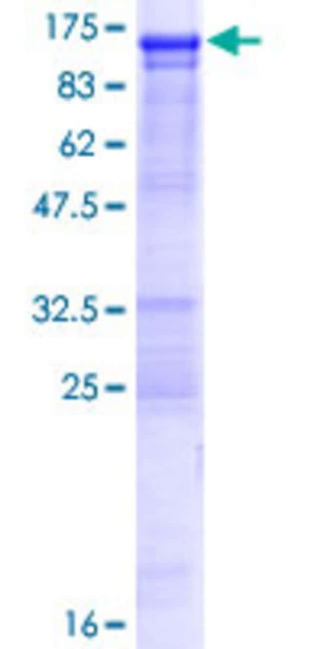 AbnovaHuman OSBPL3 Full-length ORF (NP_663162.1, 1 a.a. - 820 a.a.) Recombinant