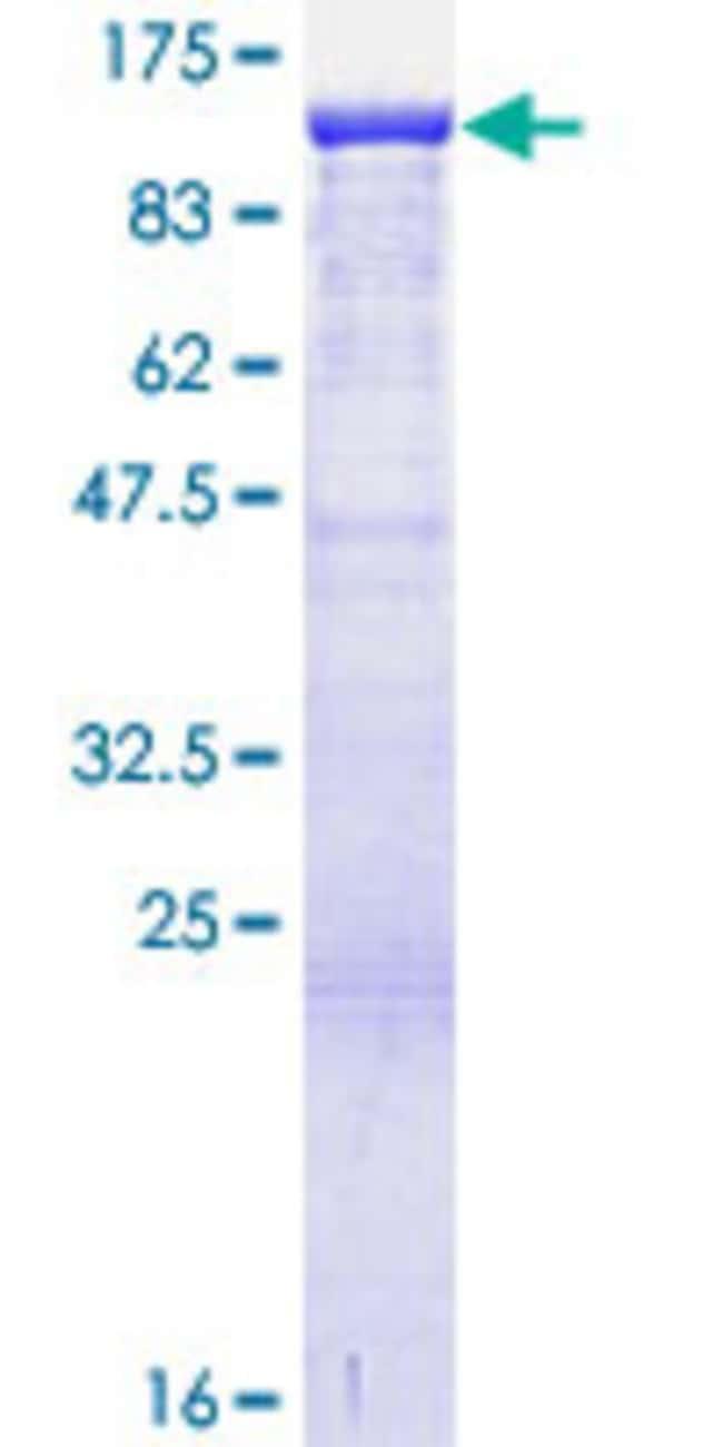 AbnovaHuman ANKRD17 Full-length ORF (AAH43394.1, 1 a.a. - 751 a.a.) Recombinant