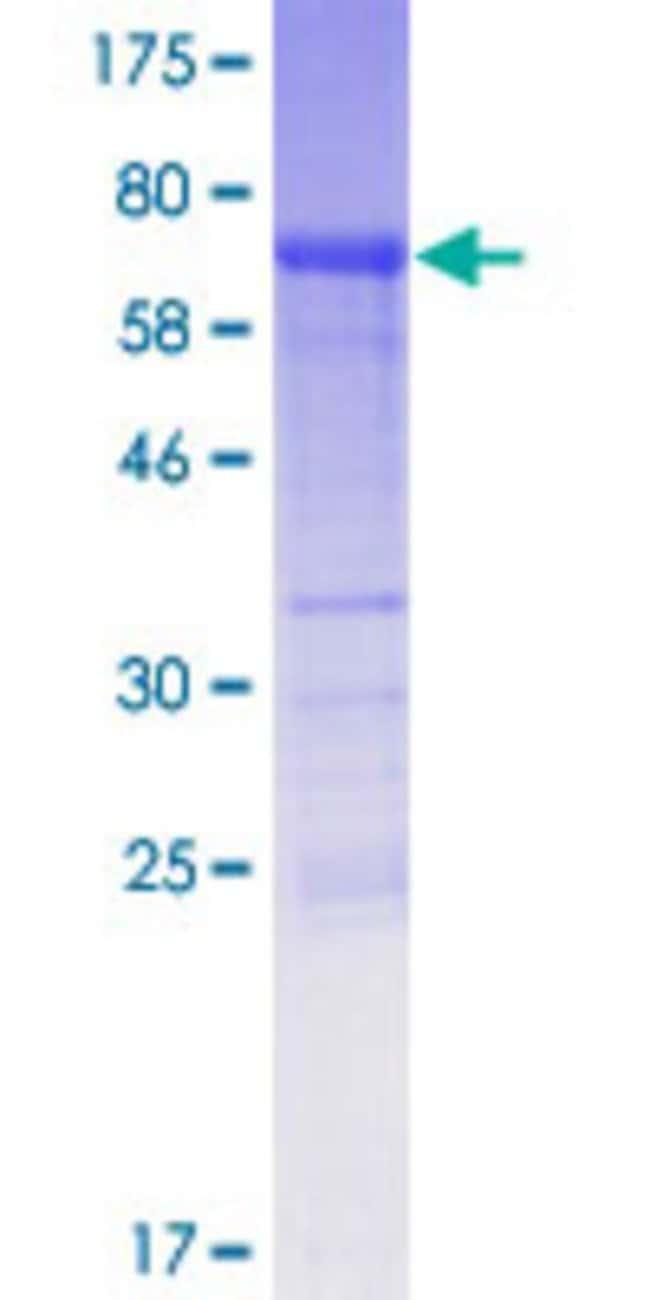 AbnovaHuman PYGO1 Full-length ORF (AAI46573.1, 1 a.a. - 419 a.a.) Recombinant
