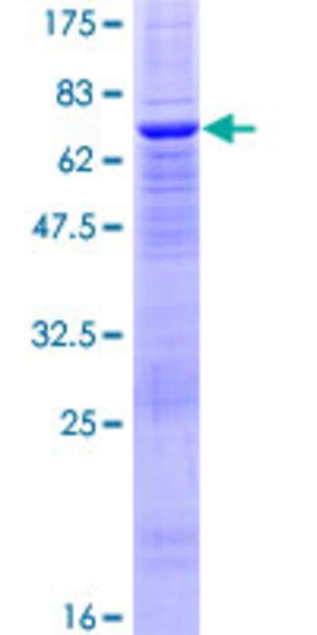 AbnovaHuman PTPN18 Full-length ORF (AAH52800.1, 1 a.a. - 351 a.a.) Recombinant