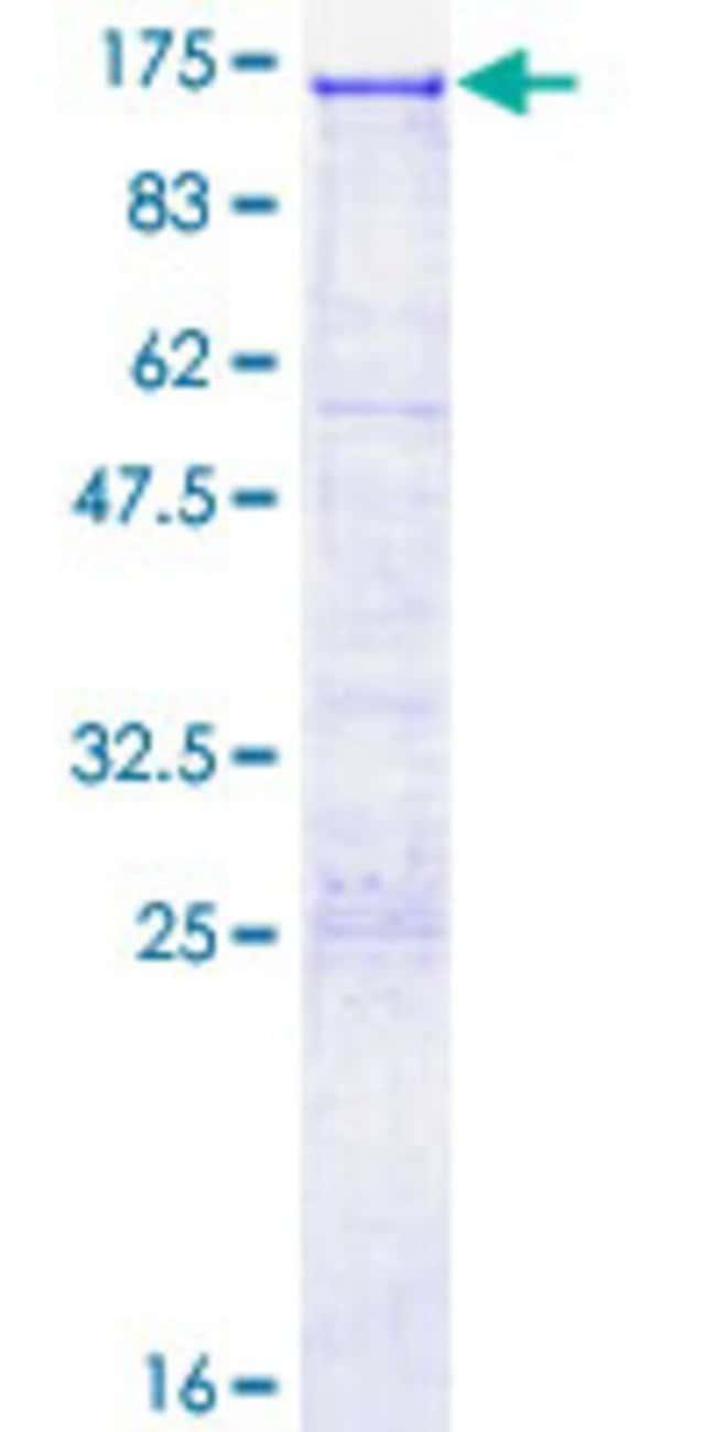 AbnovaHuman SEZ6L2 Full-length ORF (AAH00567.1, 1 a.a. - 809 a.a.) Recombinant