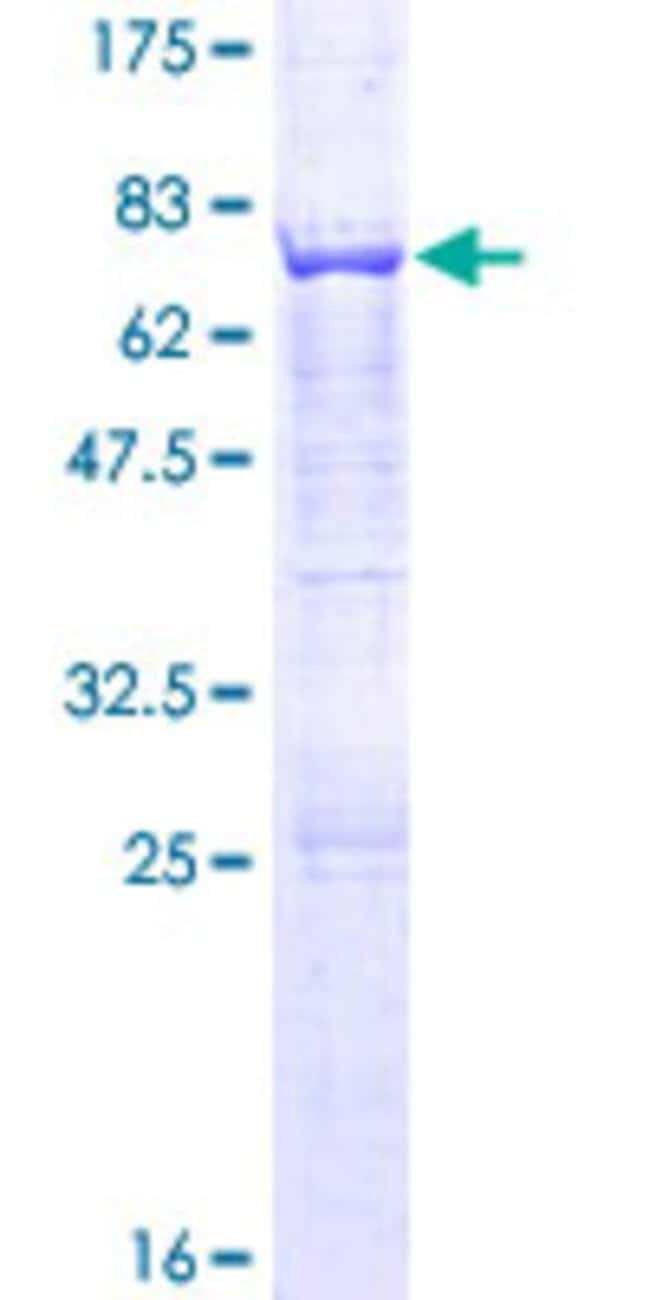 AbnovaHuman AP3M1 Full-length ORF (NP_036227.1, 1 a.a. - 418 a.a.) Recombinant