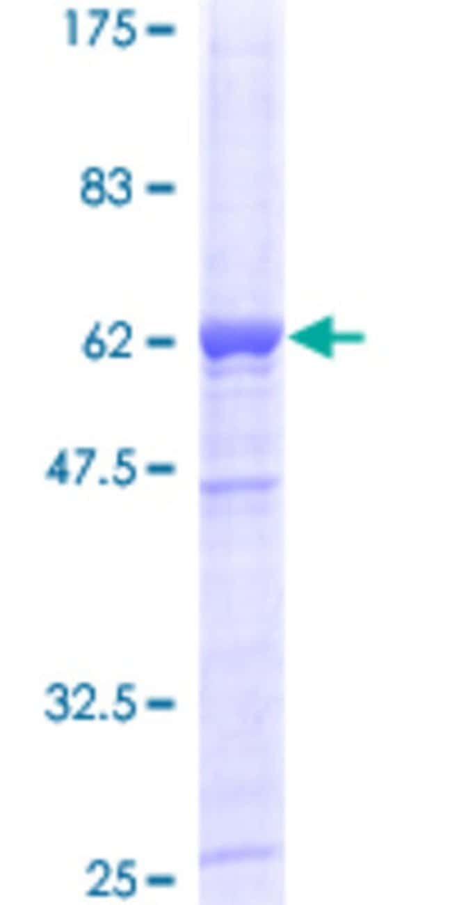 AbnovaHuman DAPP1 Full-length ORF (AAH12924, 1 a.a. - 280 a.a.) Recombinant