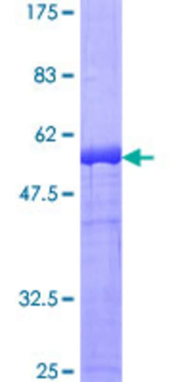 AbnovaHuman DAPP1 Full-length ORF (AAH12924.1, 1 a.a. - 280 a.a.) Recombinant