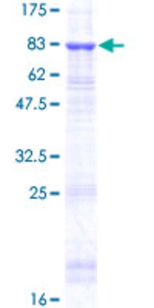 AbnovaHuman TINAG Full-length ORF (NP_055279.2, 1 a.a. - 476 a.a.) Recombinant