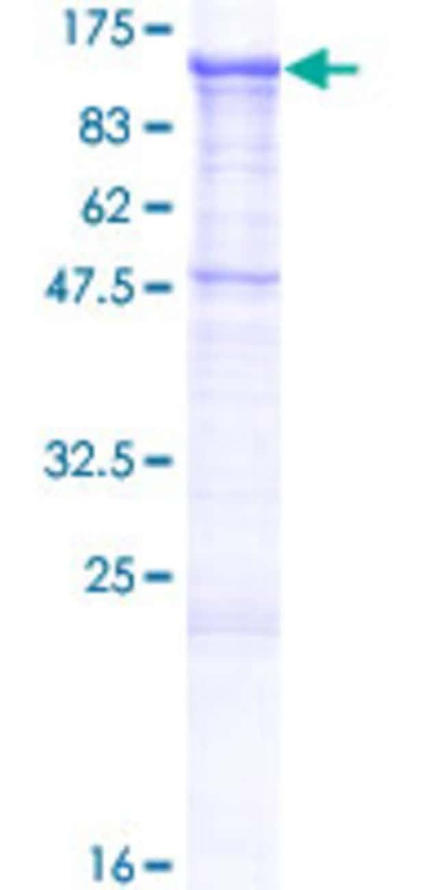AbnovaHuman CDH19 Full-length ORF (NP_066976.1, 1 a.a. - 772 a.a.) Recombinant