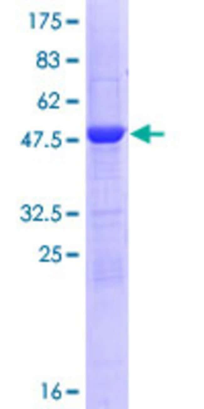 Abnova™Human C9orf32 Full-length ORF (NP_054783.2, 1 a.a. - 223 a.a.) Recombinant Protein with GST-tag at N-terminal 10μg Abnova™Human C9orf32 Full-length ORF (NP_054783.2, 1 a.a. - 223 a.a.) Recombinant Protein with GST-tag at N-terminal