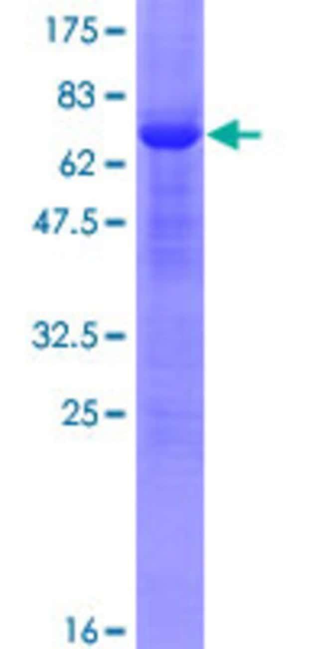 AbnovaHuman DNMT3L Full-length ORF (AAH02560.1, 1 a.a. - 386 a.a.) Recombinant