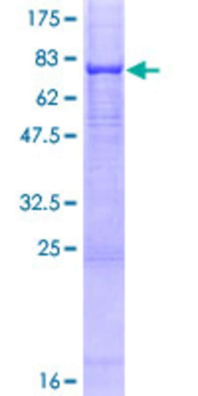AbnovaHuman DPP7 Full-length ORF (AAH16961.1, 1 a.a. - 492 a.a.) Recombinant