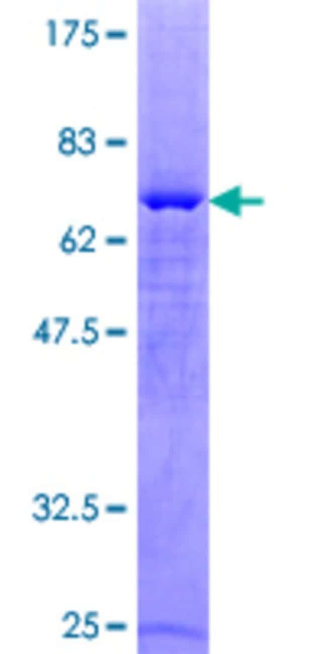AbnovaHuman PARD6A Full-length ORF (NP_001032358.1, 1 a.a. - 345 a.a.)