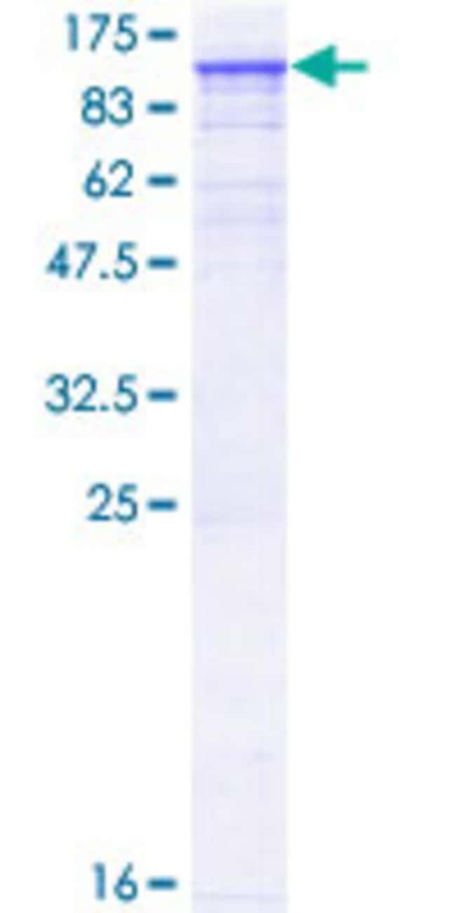 AbnovaHuman TNNI3K Full-length ORF (AAH32865.1, 1 a.a. - 843 a.a.) Recombinant