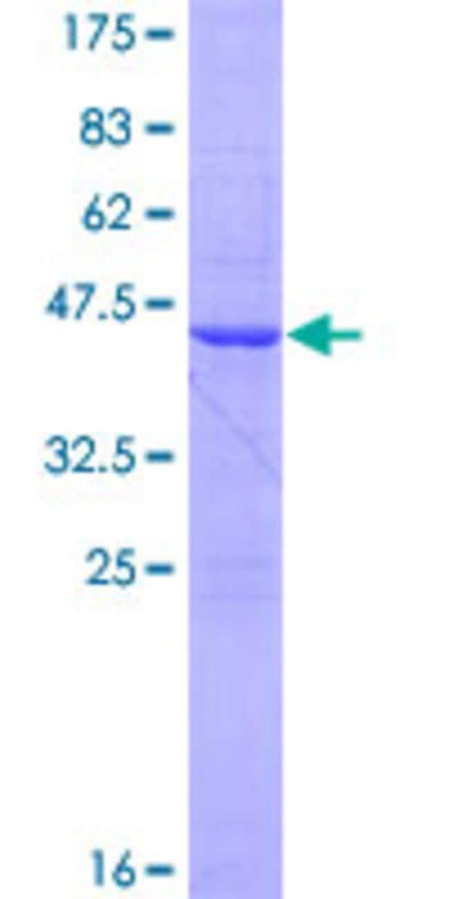 AbnovaHuman FAM96B Full-length ORF (NP_057146.1, 1 a.a. - 163 a.a.) Recombinant