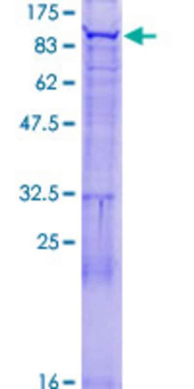 AbnovaHuman FBXO40 Full-length ORF (NP_057382.1, 1 a.a. - 709 a.a.) Recombinant