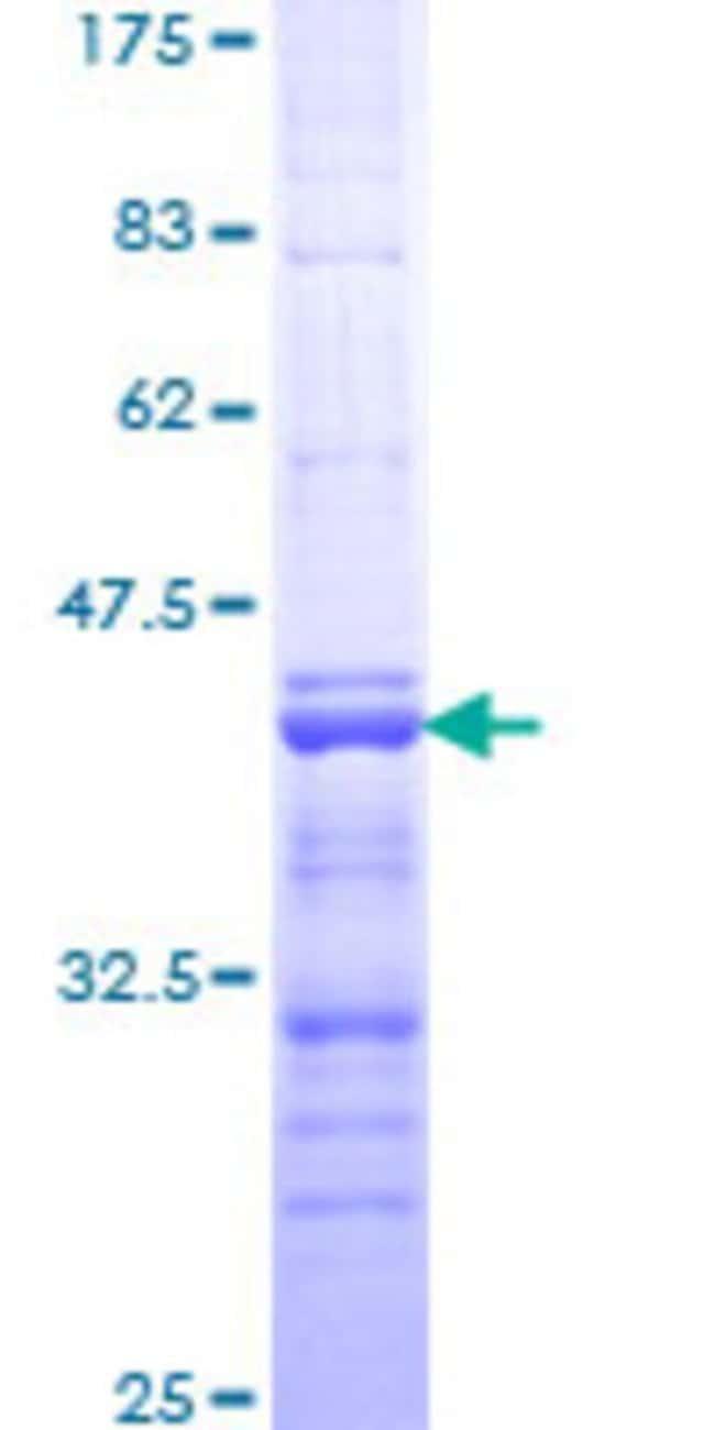 AbnovaHuman GHRL Partial ORF (NP_057446, 24 a.a. - 117 a.a.) Recombinant